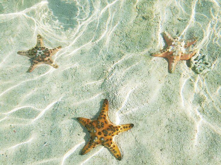 starfish kanawa island indonesia