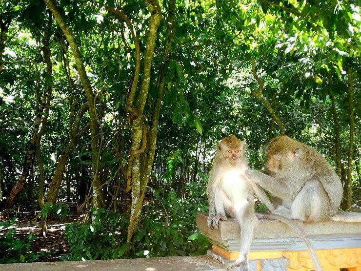 bali monkey forest alas kedaton