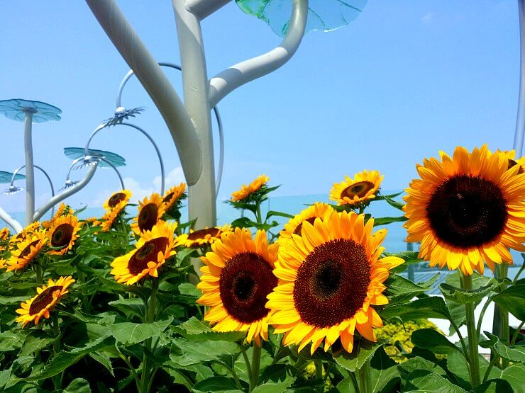 changi airport sunflower garden