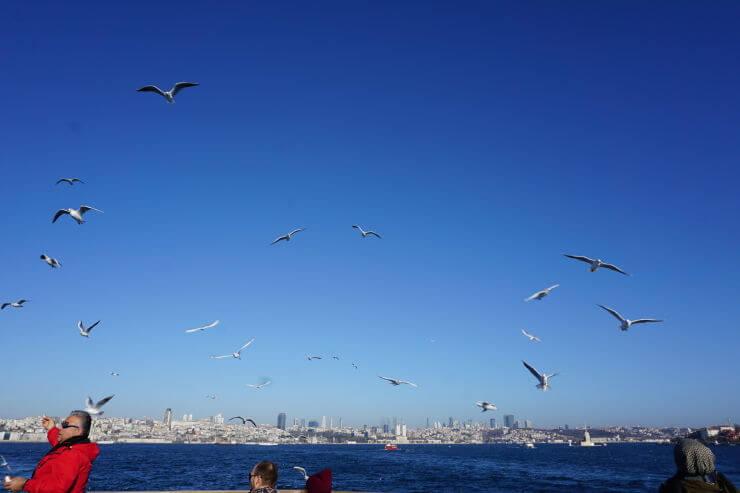 seagulls along the bosphorus strait istanbul turkey